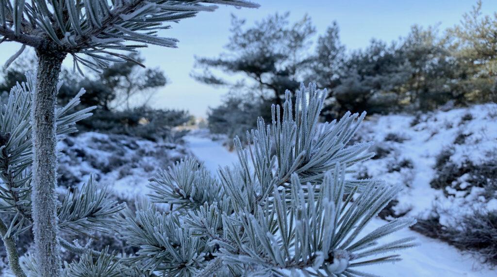 Winterweg