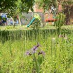 Wildblumenstreifen